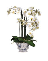 White Orchid Phalaenopsis Plants In Decorative Ceramic Plant