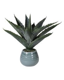Green Aloe Vera Spikey In Pale Blue Glazed Ceramic Pot