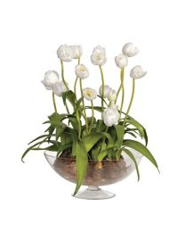 White Tulips With Bulbs In Glass Footed Bowl