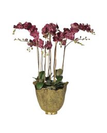 Damson Orchid Phalaenopsis Large Plants In Antiqued Gold Decorative Planter