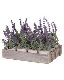 Lavenders Mini X12 In Pots In Wooden Tray
