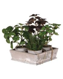 Set Of 4 Natural Herbs In Grey Pots Displayed In Tray