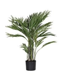Green Small Areca Palm In Black Plastic Pot